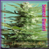 Advanced Auto Sweet Dwarf Female 3 Weed Seeds